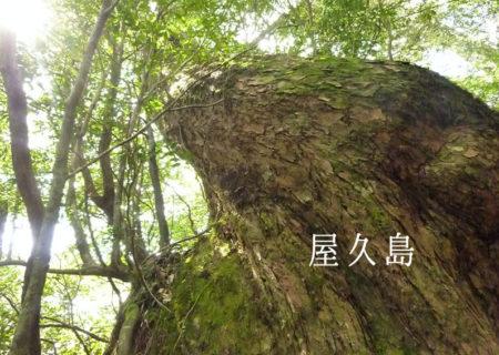 屋久島。水と緑あふれる世界遺産の島で、心を洗う。癒しのボイスヒーリング紀行